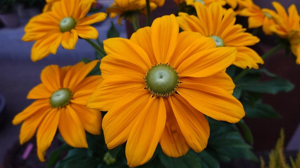 Flowers, Yellow Flowers, Garden, Nature
