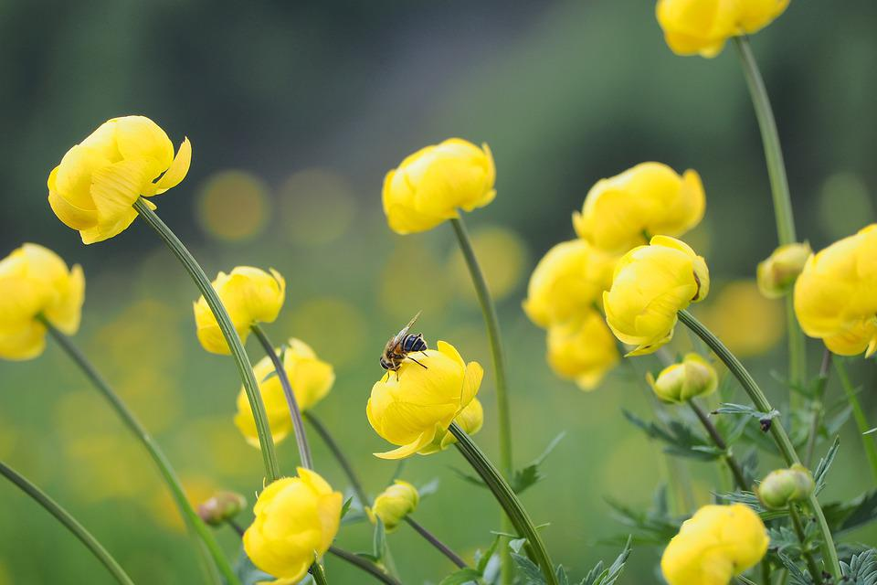 Bee, Yellow Flowers, Pollinate, Pollination, Bloom