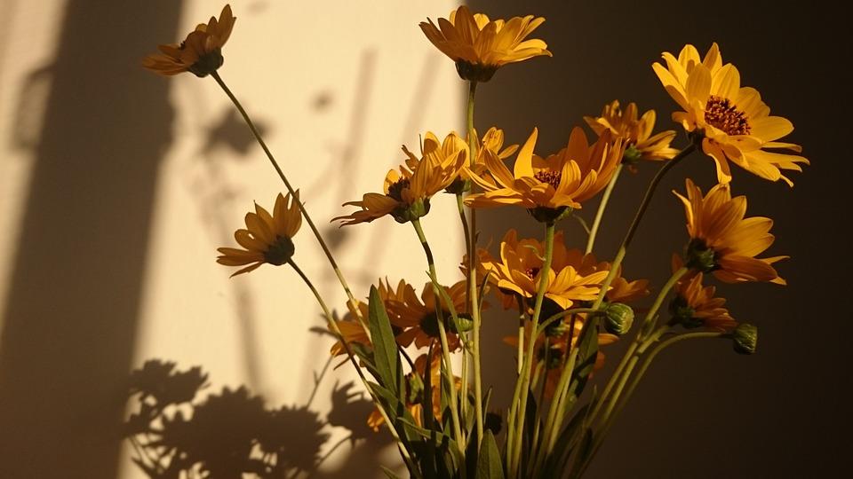Flowers, Sun, Yellow, Bouquet, Nature, Summer