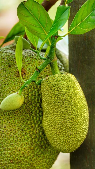Leaf, Flora, Food, Jack Fruit, Jakfruit, Green, Yellow