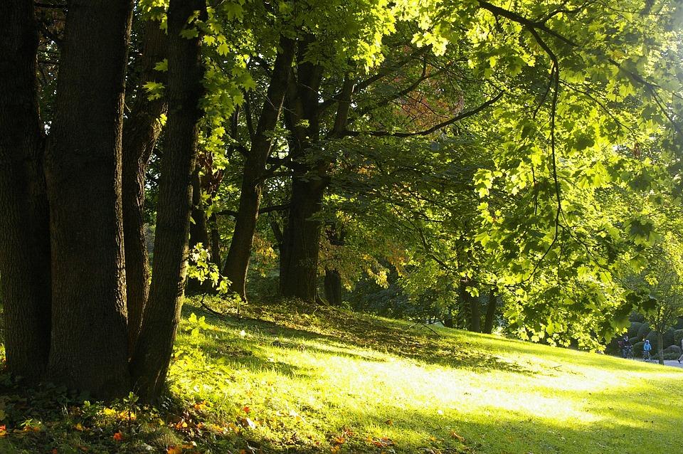Summer, Forest, Meadow, Sun, Yellow, Green, Light, Warm