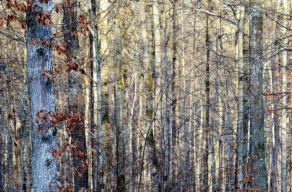 Forest, Light, Winter, Nature, Landscape, Trees, Yellow