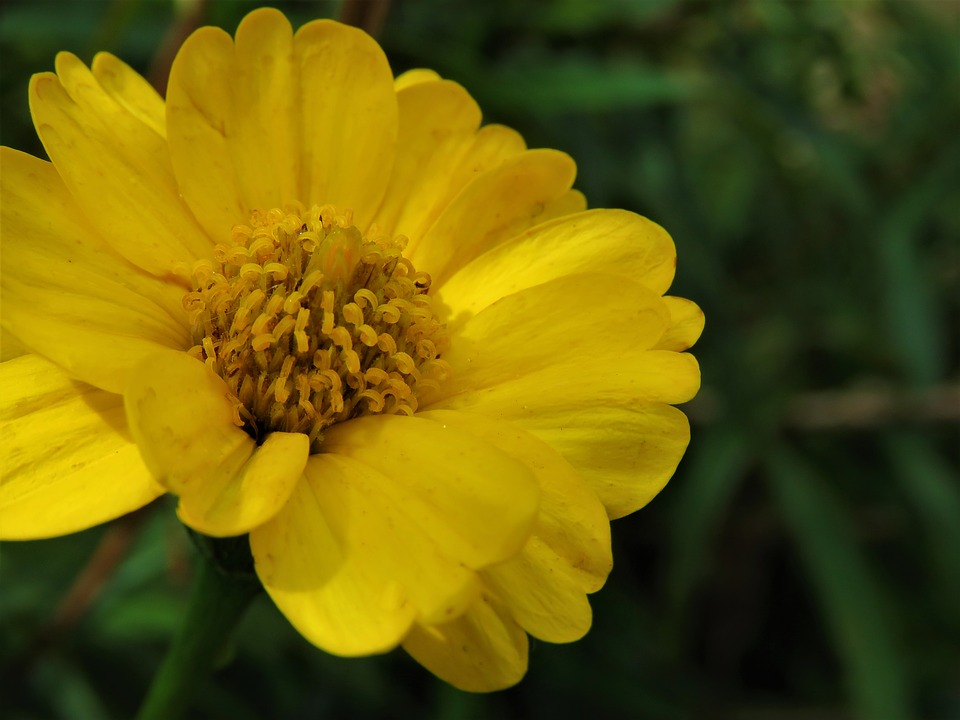Yellow, Nature, Flora, Flower, Summer, Bright, Garden
