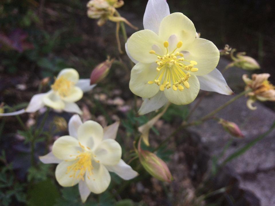 Flowers, Garden, Yellow