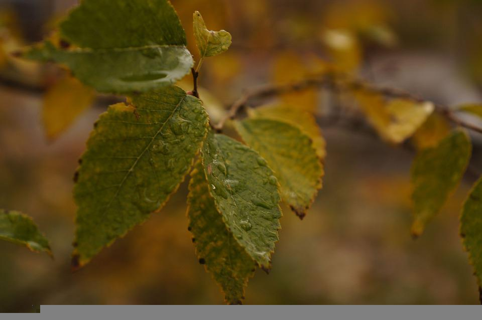 Autumn, Leaves, Yellow, Green, Tree, Park, Ecology