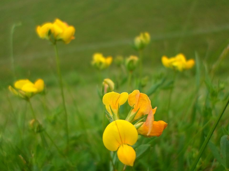 Free Photo Yellow Green Flower Wild Yellow Flowers Nature Max Pixel