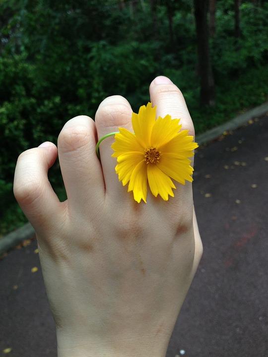 Flowers, Yellow, Hand