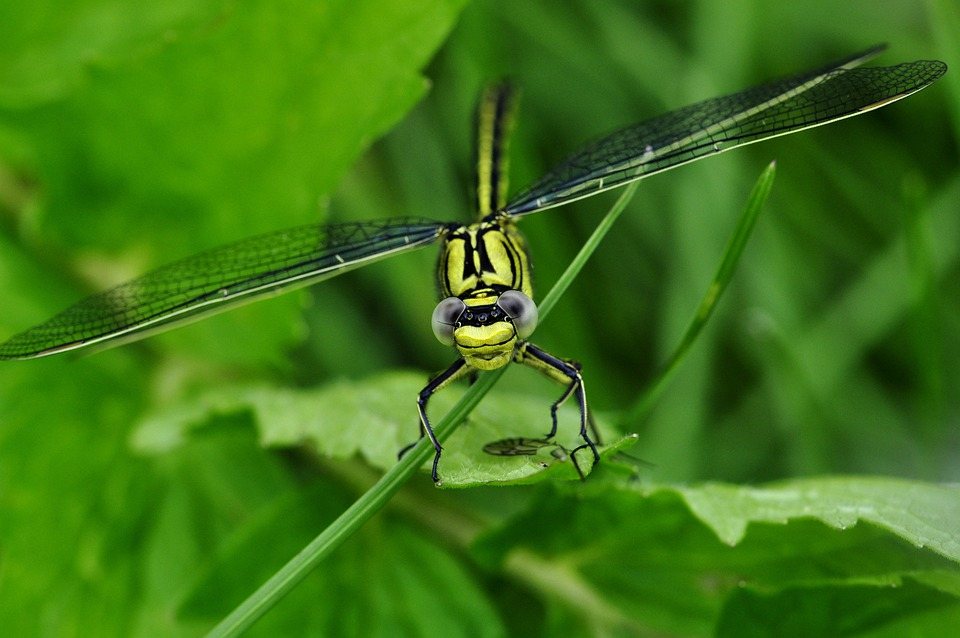Dragonfly, Macro, Insect, Predatory Insect, Yellow