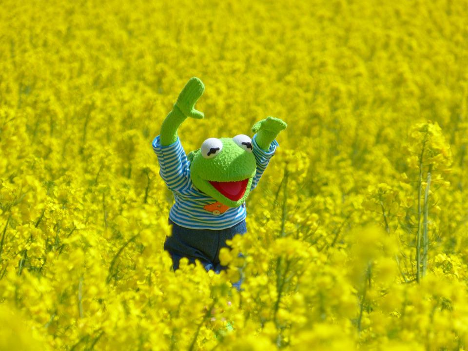 Oilseed Rape, Field Of Rapeseeds, Frog, Kermit, Yellow