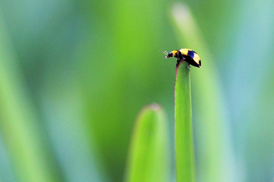 Ladybug, Nature, Yellow, Insect, Plant, Leaf, Garden