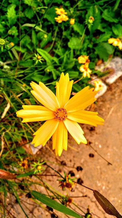 Flowers, Pool, Yellow, Land, Summer, Autumn, Cosmos