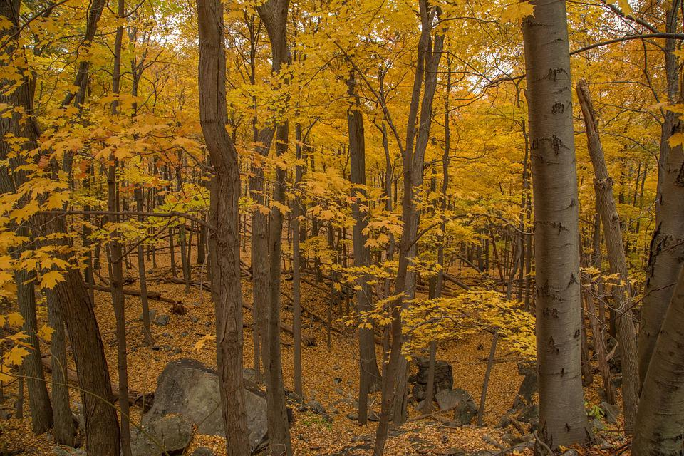 Woods, Trees, Yellow, Forest, Autumn, Nature, Landscape