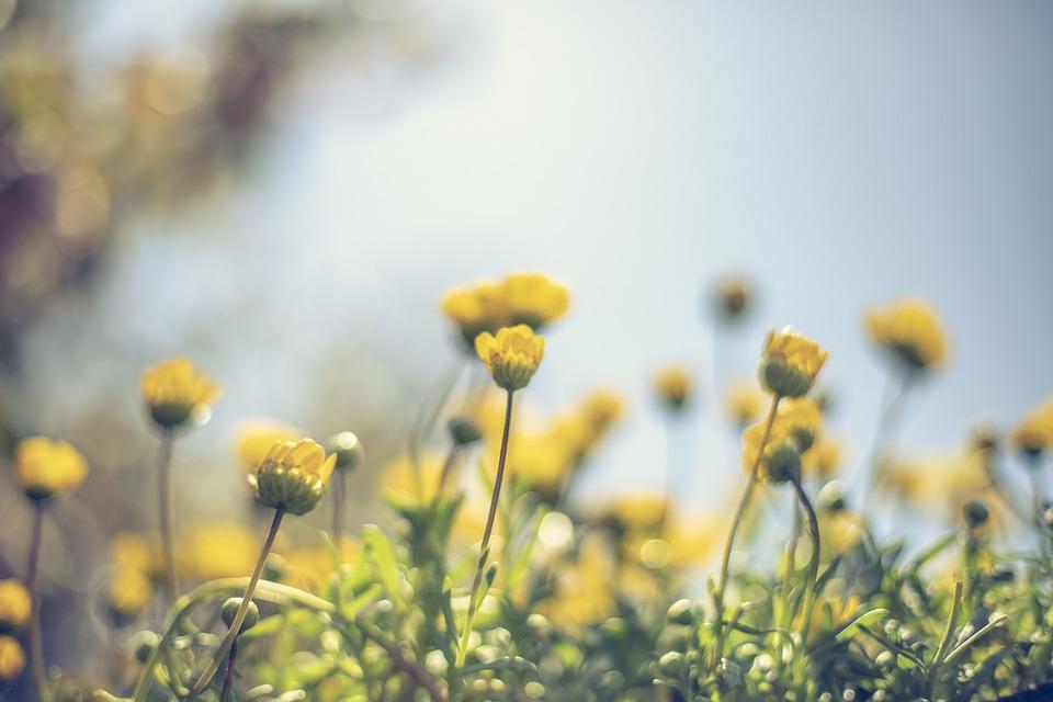 Yellow, Warm, Orange, Landscape, Nature, Sunrise