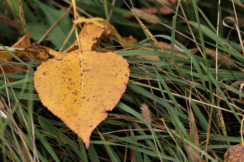 Yellow Leaf, Grass, Meadow, Autumn, Nature, Outdoor