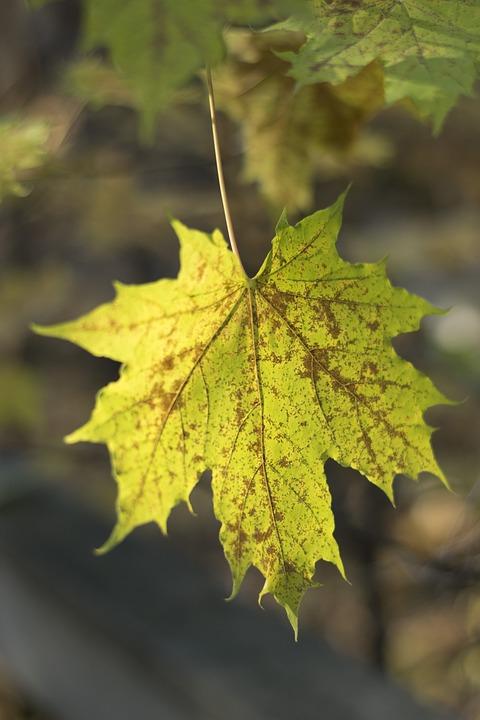 Autumn, Leaf, Yellow Leaves, Yellow, Golden Autumn