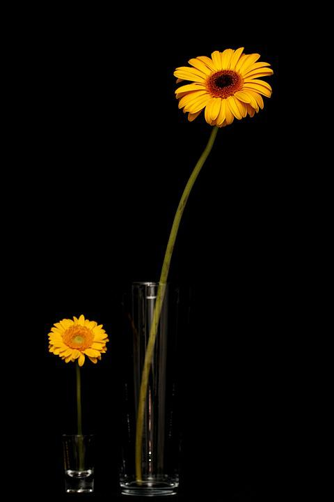 Daisy, Yellow, Leaves, Flower, Nature, Plant, Flowers