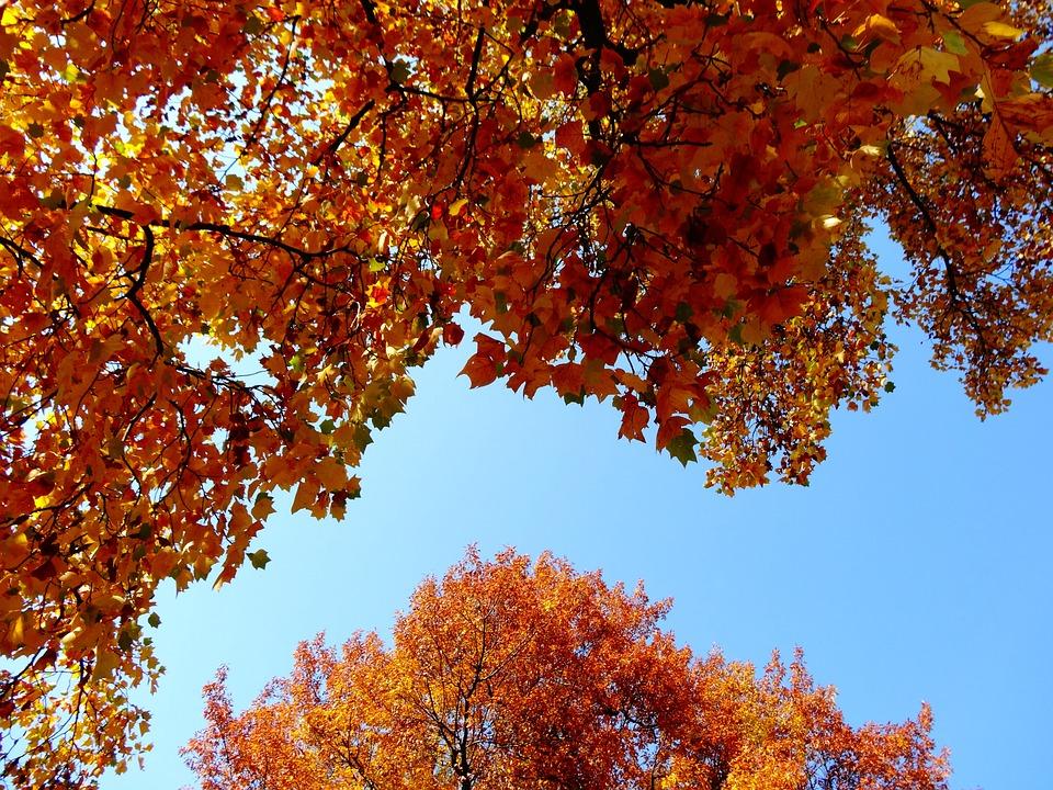 Autumn, Foliage, Yellow Leaves, Tree, Nature, Park