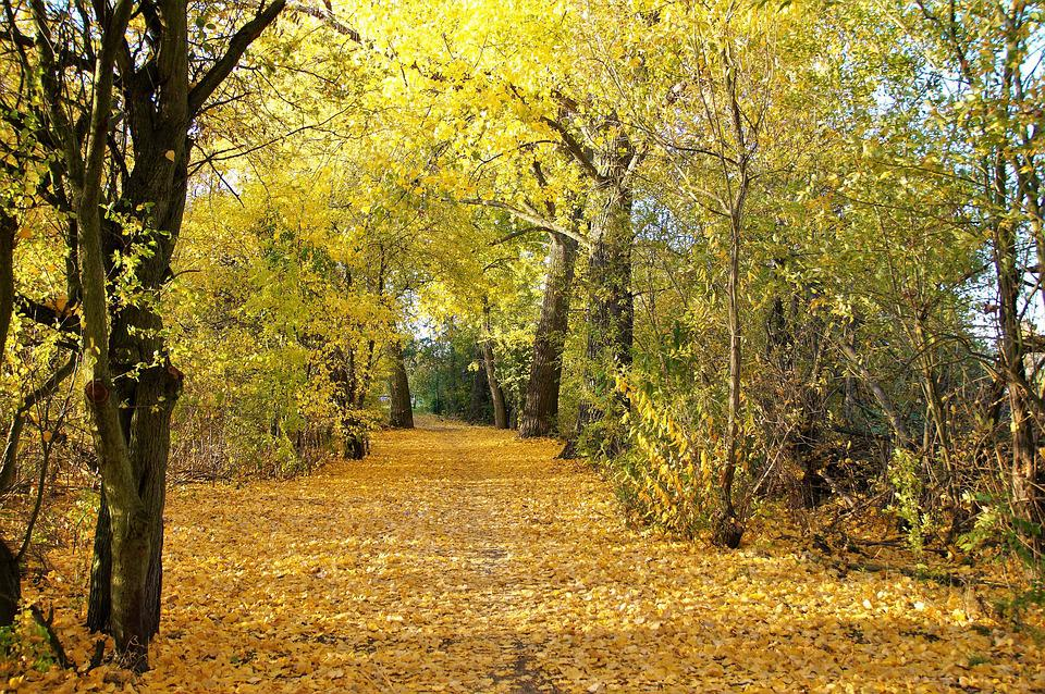 Autumn, Yellow, Fallen, Leaves, Colored, Season