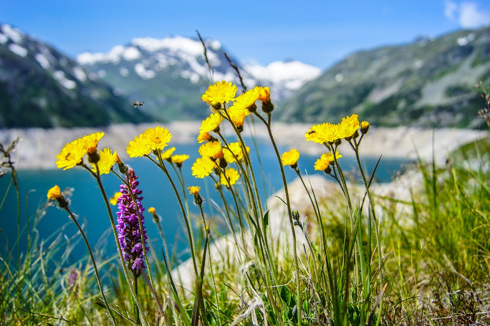 Flowers, Nature, Yellow, Yellow Flowers, Herbs, Meadow