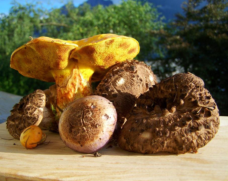 Fungi, Mixed, Yellow, Brown