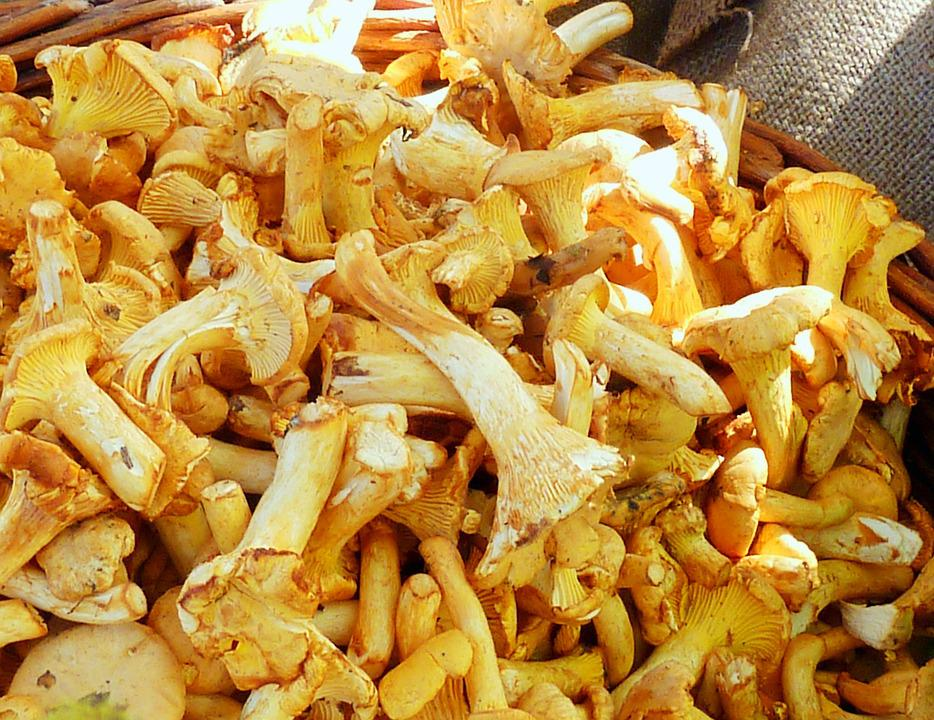 Chanterelles, Mushrooms, Market, Egg Sponge, Yellow