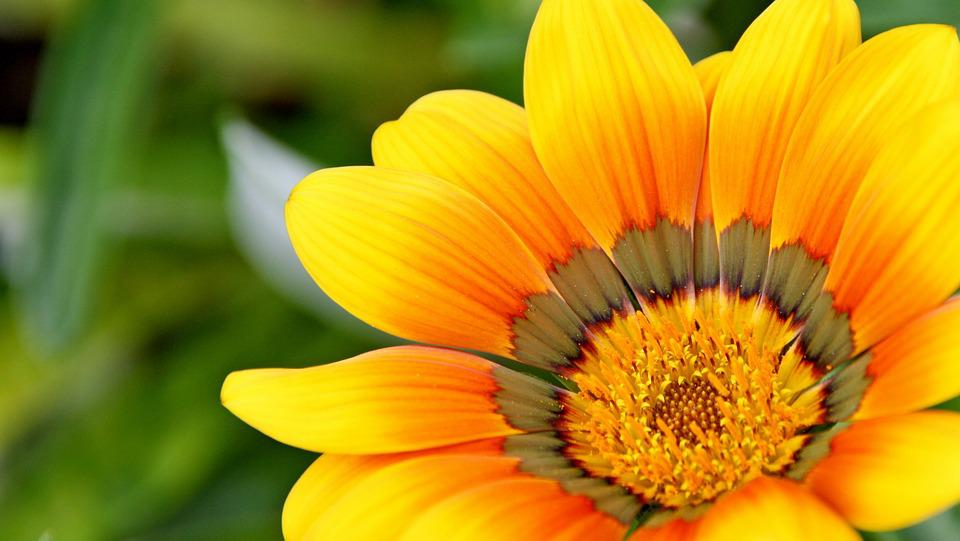 Yellow, Natural, Flower