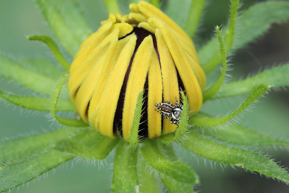 Daisy, Flower, Plant, Garden, Nature, Yellow, Macro