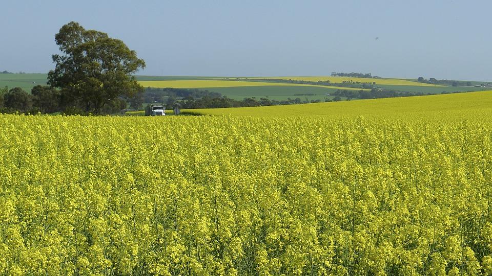 Farm, Nature, Flower, Yellow, Rural, Field