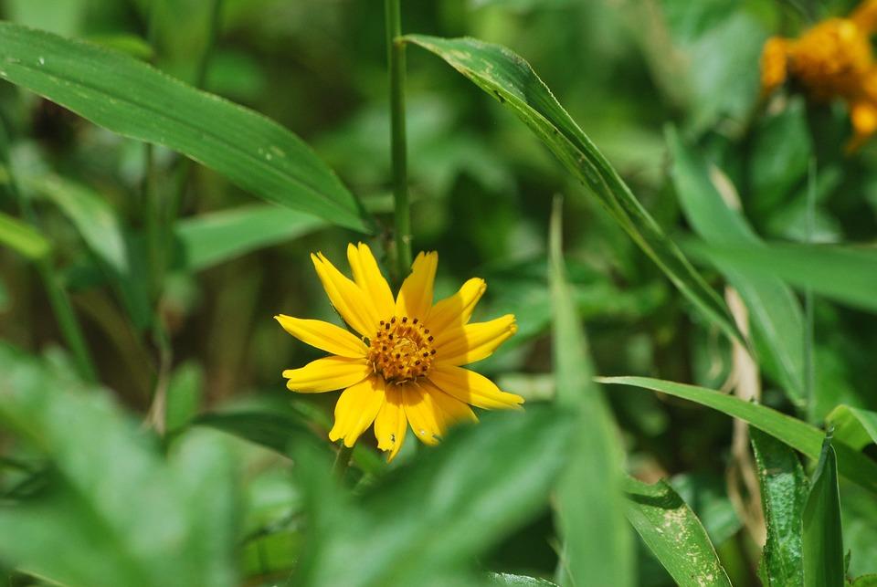 Nature, Yellow, Garden, Flowers, Small Flower, Flora