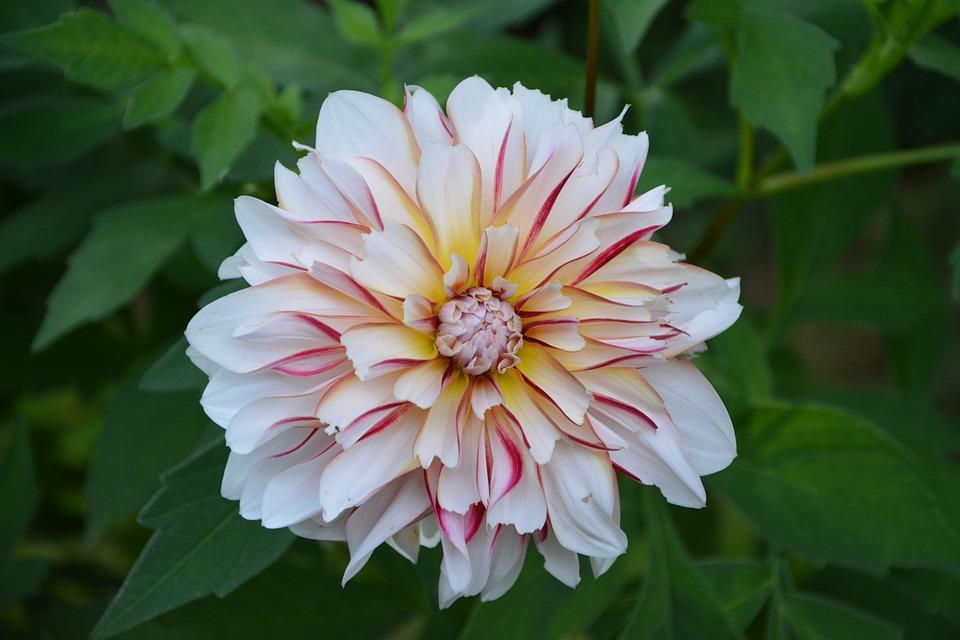 Flowers, Petals, Pink, Yellow, White, Nature, Garden