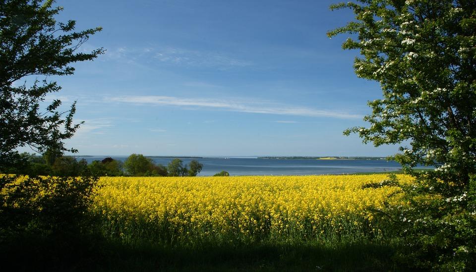 Mark, Yellow, Natural, Denmark, Oilseed Rape, View