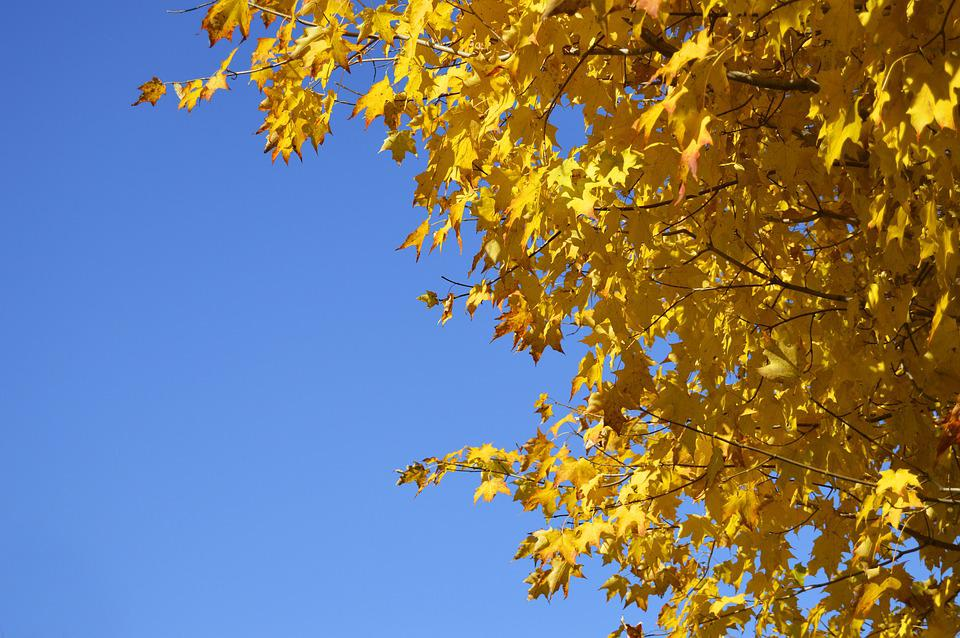 Yellow, Tree, Orange, Leaves, Nature, Autumn, Fall