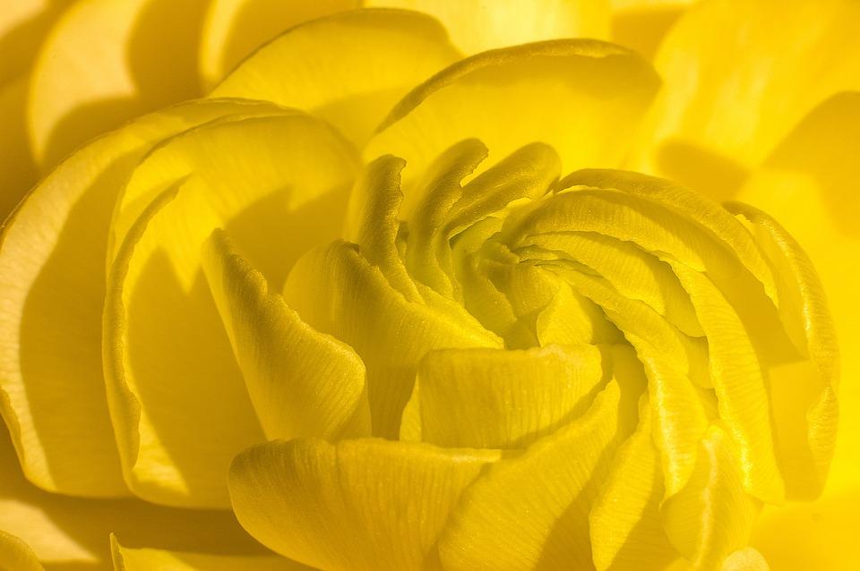 Flower, Petals, Bloom, Yellow