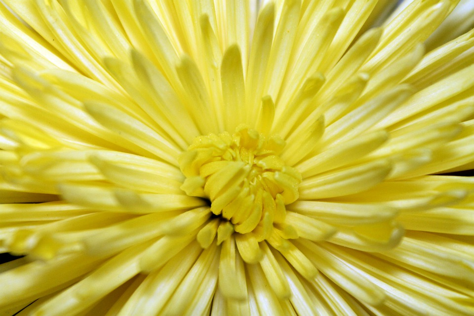 Flower, Opened, Bloom, Yellow, Bright, Petals