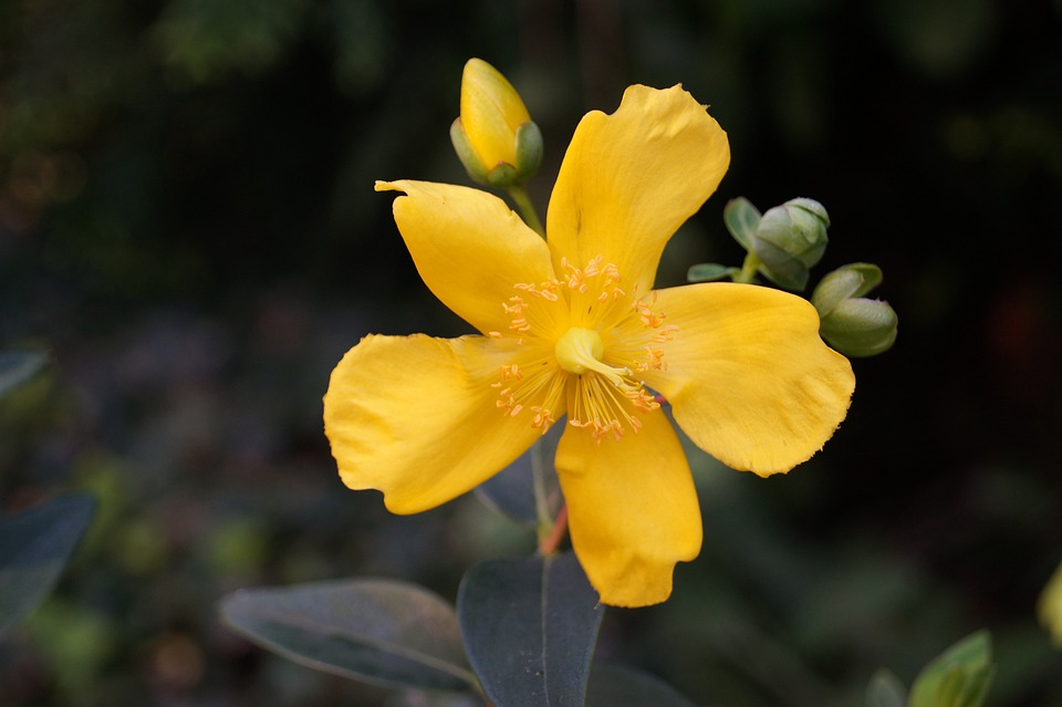 Blossom, Bloom, Plant, Flower, Nature, Yellow