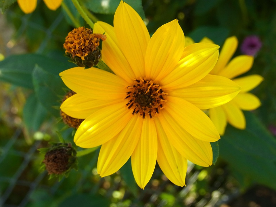 Flower, Plant, Yellow, Nature, Forest, Meadow