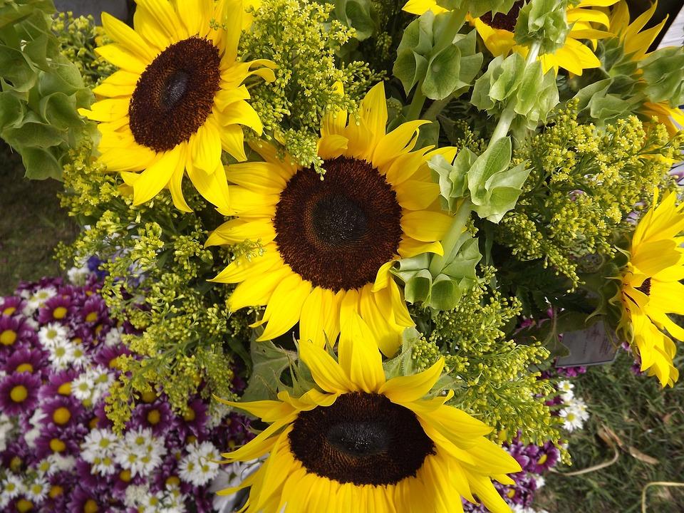 Sunflowers, Sunflower, Plants, Yellow, Flowers