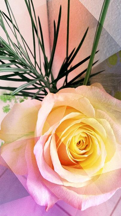 Free photo yellow rose yellow rose friendship flowers love max pixel rose flowers yellow love friendship yellow rose mightylinksfo