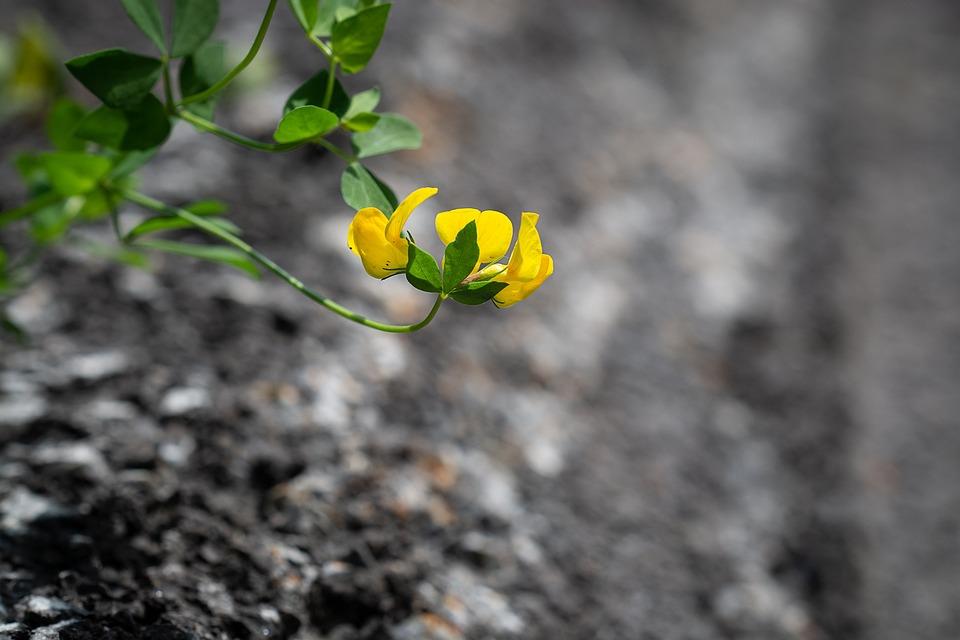 Flower, Yellow, Small, Yellow Flower, Small Flower