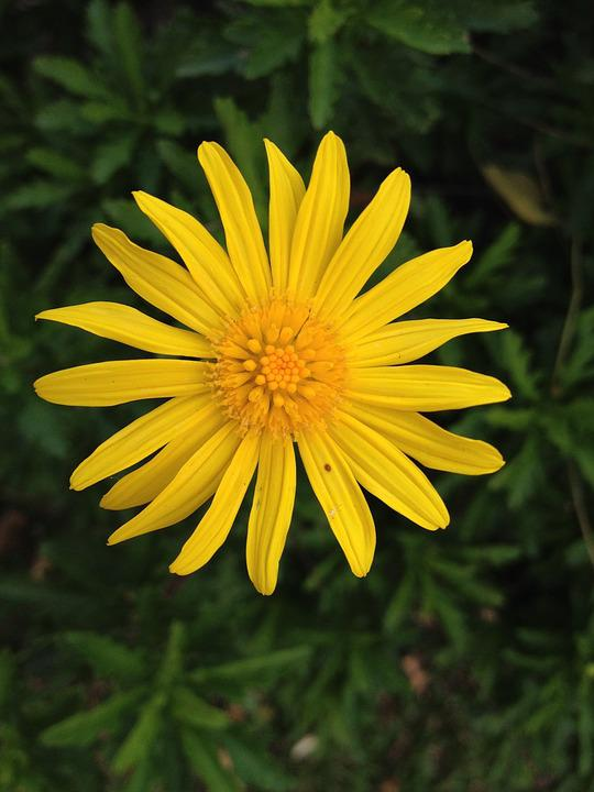 Free Photo Yellow Small Flower Flowers Flower Nature Max Pixel