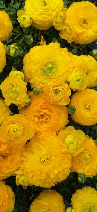 Flowers, Spring Flowers, Yellow