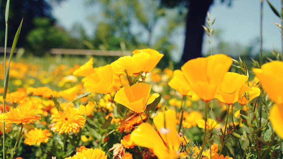 Flowers, Nature, Grass, Spring, Meadow, Yellow