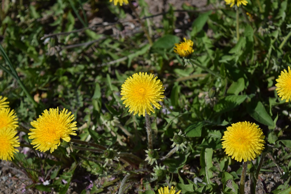 Flowers, Nature, Yellow, Spring, Summer, Spring Flower