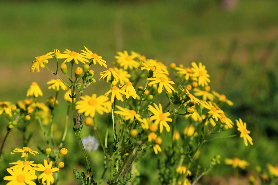 Flowers, Spring, Yellow, Color, Nature, Plant, Flora