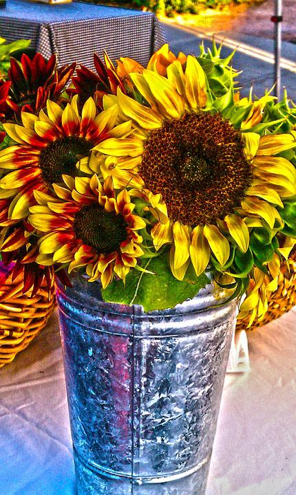 Sunflowers, Flowers, Summer, Yellow, Floral, Sun
