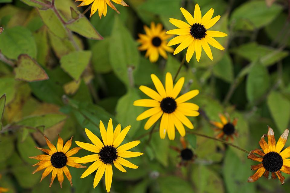 Flowers, Yellow, Green, Sunday Flowers, Blossom, Bloom