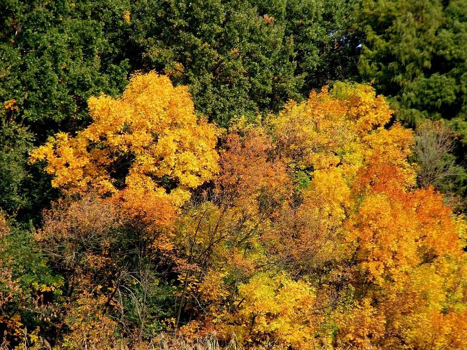 Trees, Autumn, Landscape, Leaf, Feerie, Yellow
