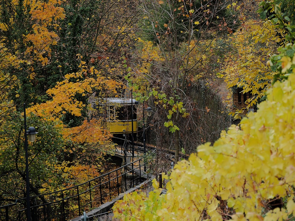 Autumn, Yellow, Dresden, Funicular Railway, Vineyard
