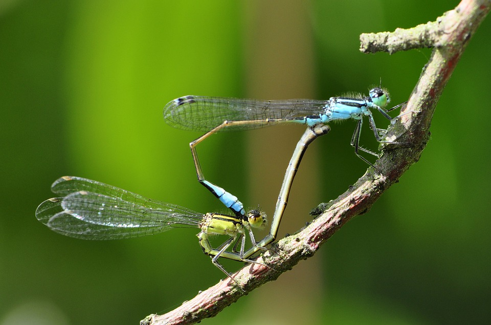 Dragonfly, Insect, Lake, Water, Close, Macro, Yellow
