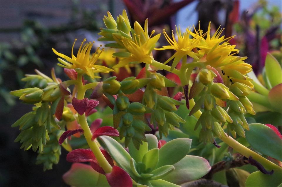 Free photo yellow yellow flower bloom flowers spring flowers max pixel flowers yellow bloom spring flowers yellow flower mightylinksfo